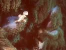 Geisterfetztenfisch