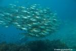 Foto aus dem Bereich, wo das künstliche Riff kaum noch von einem natürlichen zu unterscheiden ist.