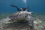 Schildkröte mit Andi im Hintergrund